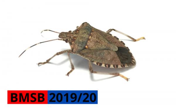 2019/20 BMSB season update