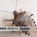 BMSB 2020/21 Update