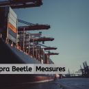 Khapra Beetle Measures on Sea Freight