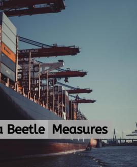Khapra Beetle Measures on Sea Freight