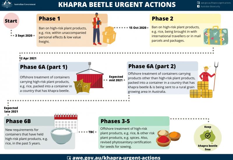 Khapra Beetle Phases