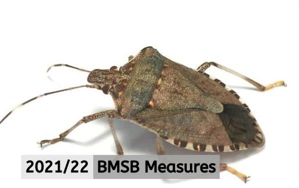BMSB 2021/22